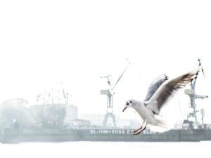 Möwe Hamburger Hafen Motiv 246 |  |