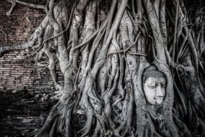 Natur erobert zurück Thailand 880     