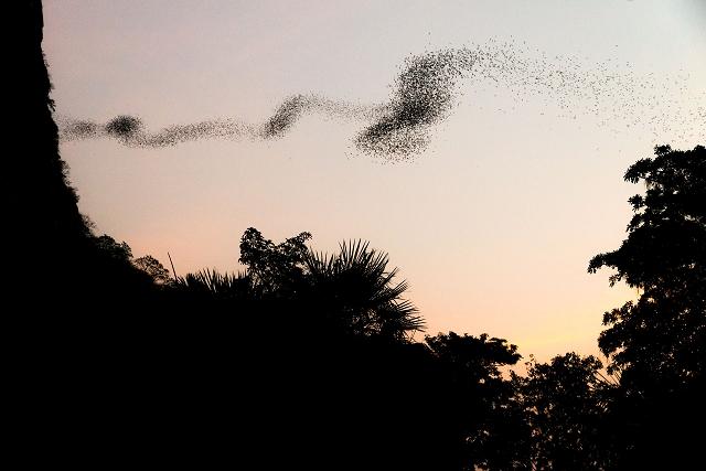 Insektenschwarm Thailand 914 |  |