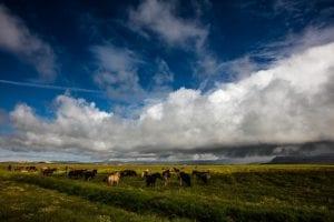 Island Pferde | Bernd Willeke |