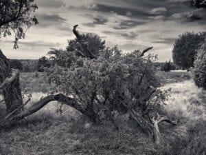Bäume s/w Motiv 1153 | Nasario Khan |