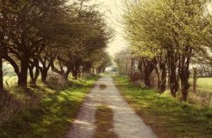 Der lange Feldweg Motiv 1106 | Sebastian Klaffka |