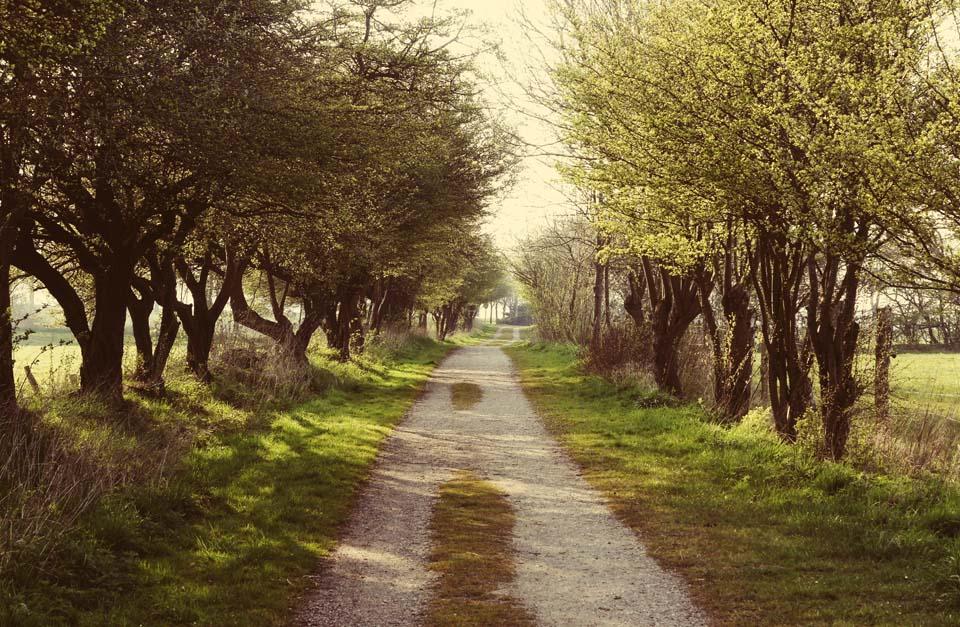 Der lange Feldweg Motiv 1106 |  |