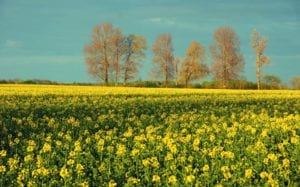Die gelbe Pracht Motiv 1149 | Sebastian Klaffka |