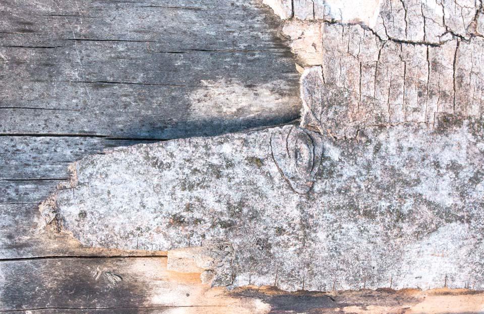 Holzblick Motiv 1169 |  |