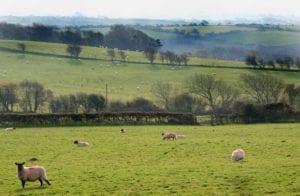 Schafe Wales Großbritannien Motiv 1238 <br />Fritz Meffert <br />