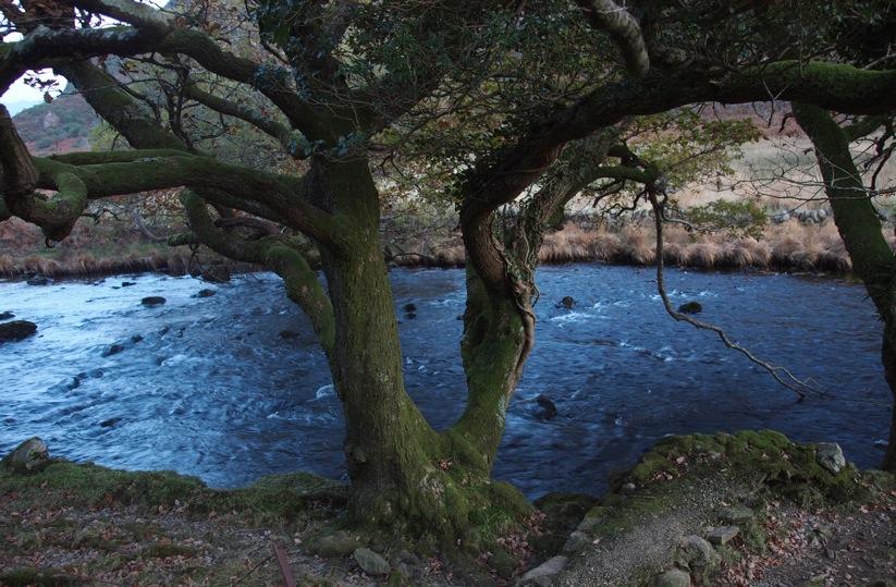 Bach Wales Großbritannien Motiv 1237 |  |