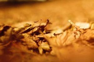 Herbstlaub Motiv 1266 |  | Matthias Enning