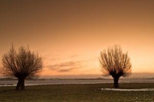 Zwillingsbäume Insel Poel Ostsee Motiv 1263 |  | Matthias Enning